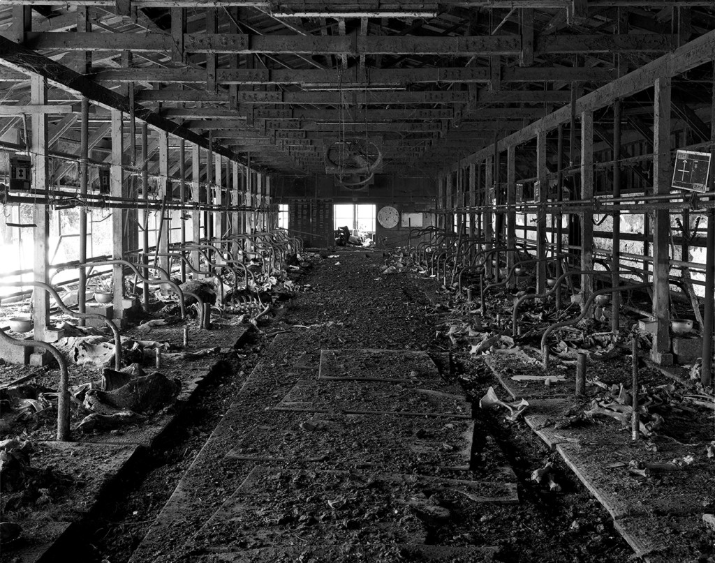 An abandoned farm inside 20km exclusion zone from the Fukushima Daiichi nuclear reactor. Dead cows are still lying in the farm.This place was visited by the photographer in April 2011 and it was left as it was before.